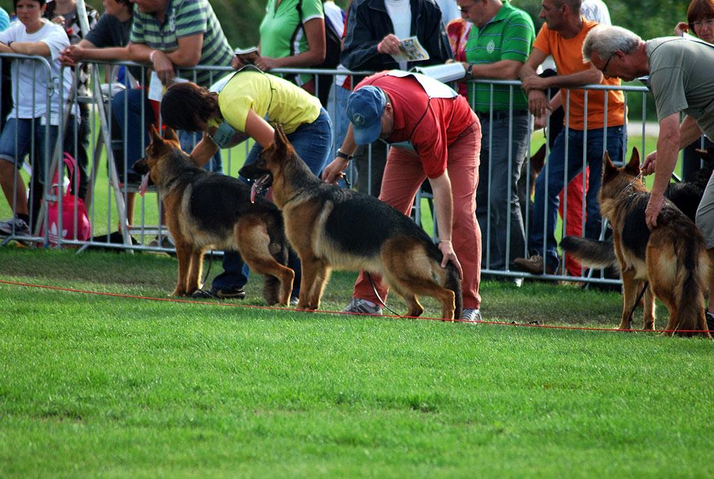 Dea di Casaluca Pastore Tedesco Roma Pensione per cani Allevamento