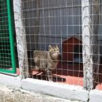 Pensione per gatti Casa Luca a Roma